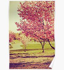 Soft Sakuras Poster