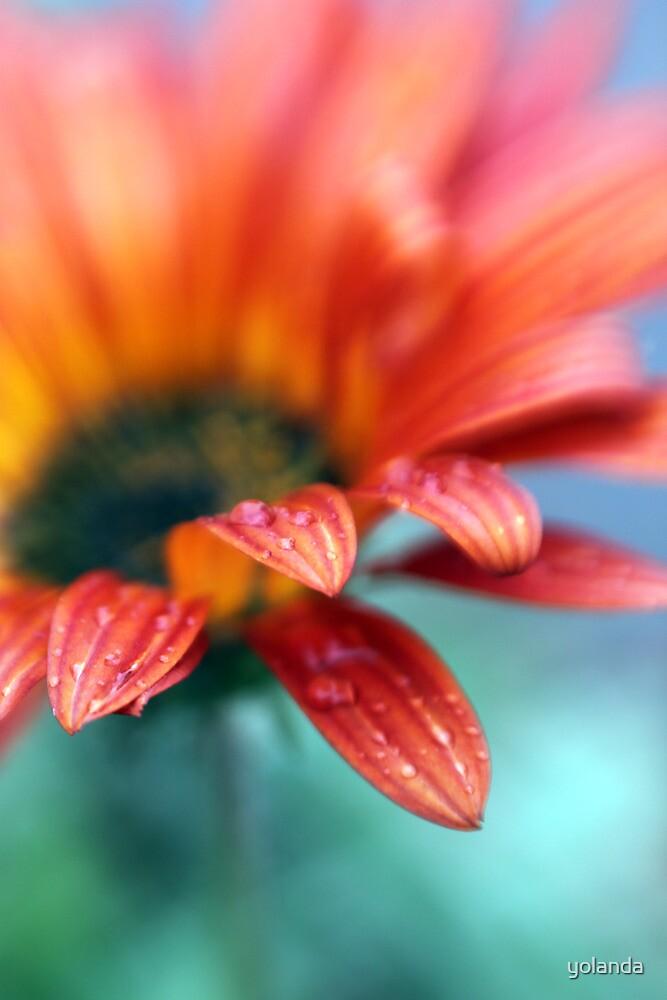A Rainy Daisy by yolanda
