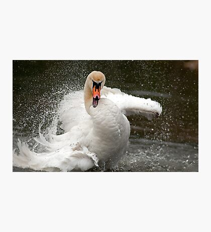 More swan attitude ! Photographic Print