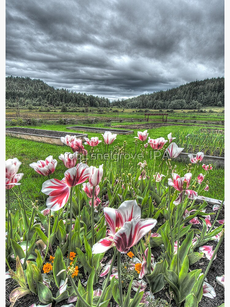 Spring on Punch's Farm by tobysnelgrove