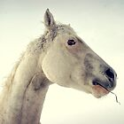 Little Hayseed, Montana horse in Winter by Donna Ridgway