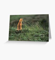 Alone but not Lonely, Fox photo by Donna Ridgway Greeting Card