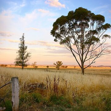 As evening descends ~ Riverina NSW by RosalieDale