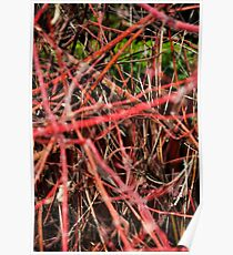Red Branches Poster
