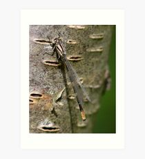 A Damsel in Camouflage Art Print