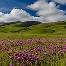 Morning Eye Candy, Owl's Clover and Rolling Hills. Carrizo Plains Spring 2019 by photosbyflood
