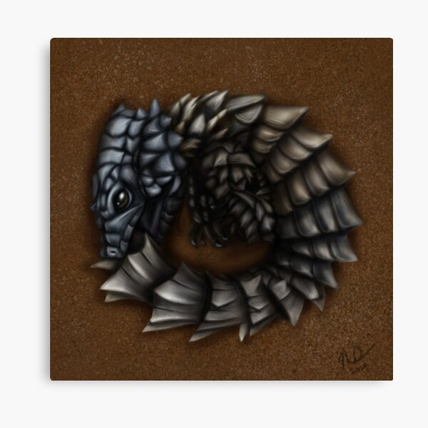 Girdled Armadillo Lizard Canvas Print