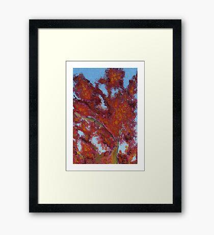 California Fall - Japanese Maple Framed Print