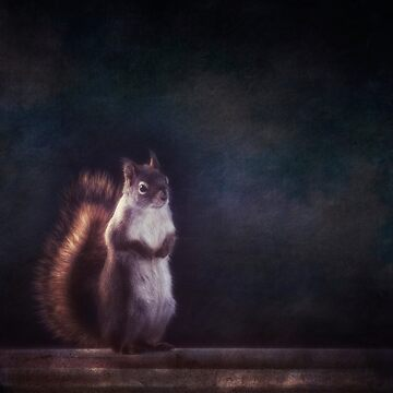 Mr. Squirrel by Mirror