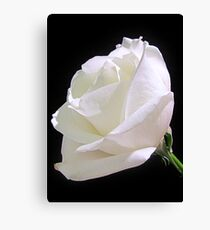 Heavenly Rose Canvas Print