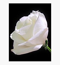 Heavenly Rose Photographic Print