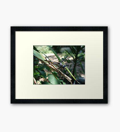 One very jazzy dragonfly... Framed Print