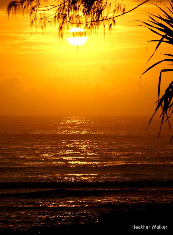 Morning Light by Heather Walker