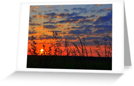 sunrise by patticake