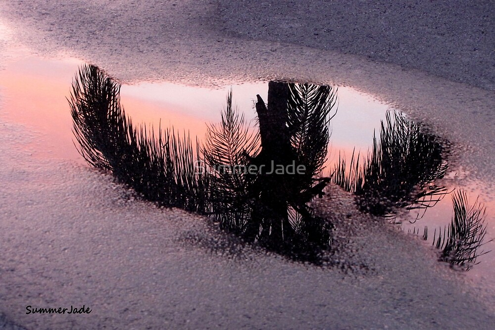 Florida Puddle Reflection by SummerJade