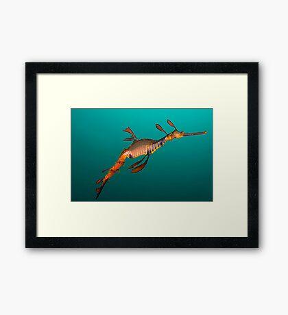 Tassie Dragon Framed Print