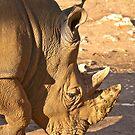White Rhino by Sherrill Meredith