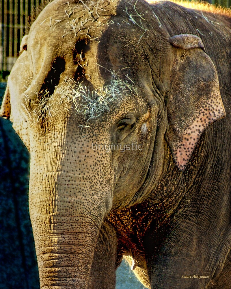 Elephant by tinymystic
