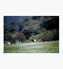 Grazing at the Edge Photographic Print