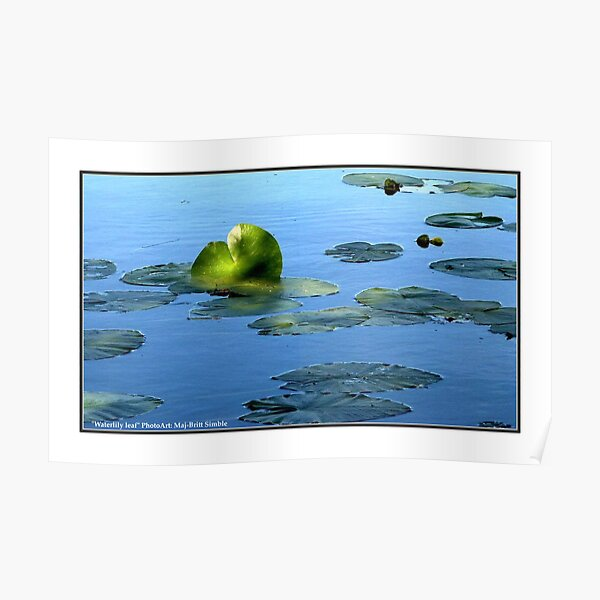 """Waterlily Leaf"" Poster"