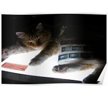 The Lightbox, the Cat and the Negatives Poster
