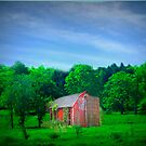 Lost In The Country by Linda Miller Gesualdo