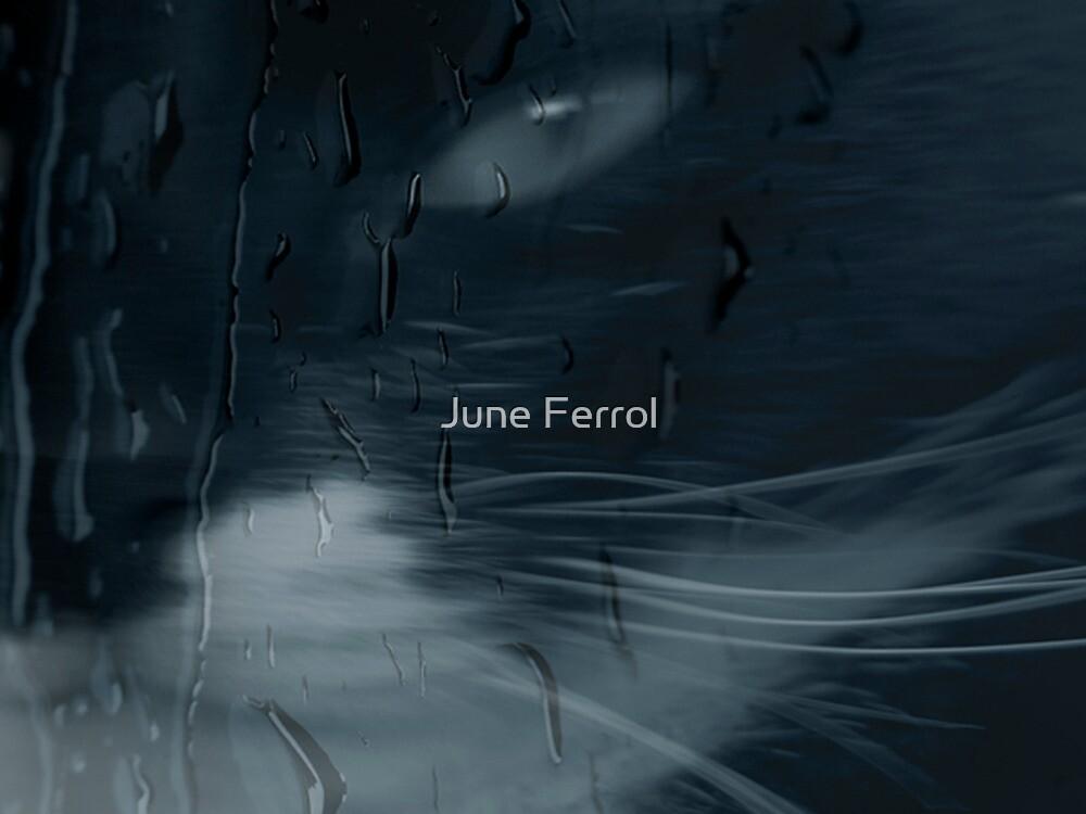 THAT LOOK by June Ferrol