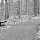 Park Bench by Declan Lopez