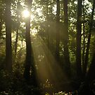 Morning Rays  by Jeff stroud