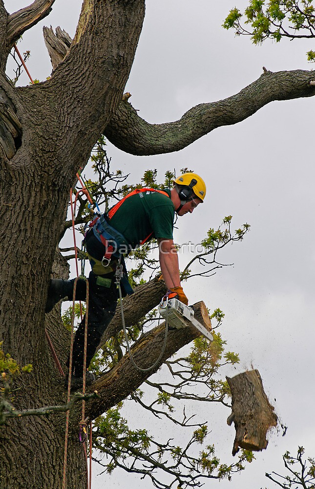 Tree surgeon cutting branch by David Carton