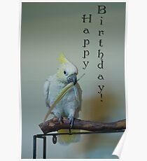 Birthday Bird Poster