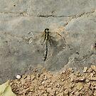 damaged dragonfly by AVNERD