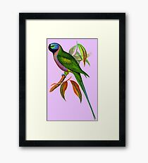 The Lord Derby's parakeet (Psittacula derbiana) Framed Print
