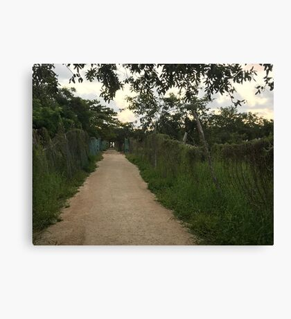 Path in Playa del Carmen (Pictures of Mexico) Canvas Print