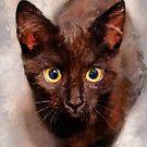 cat Hera #cat #cats #animals by JBJart
