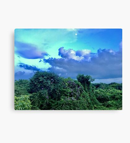 Purple Trees (Pictures of Mexico) Canvas Print