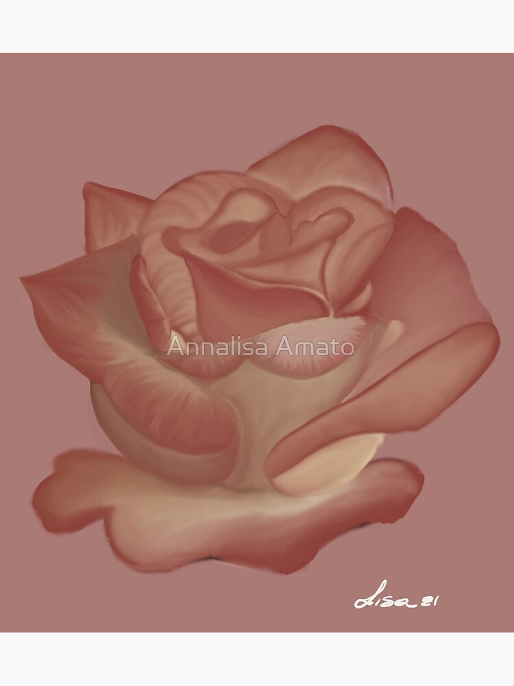 Pink Rose by annalisaamato
