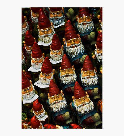 Gnomes Photographic Print