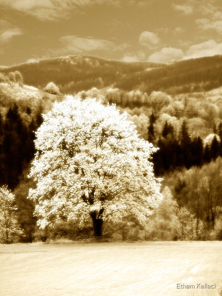 Beauty between land and sky by Ethem Kelleci