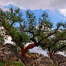 cork trees, Marvao, Alto Alentejo, Portugal by Andrew Jones