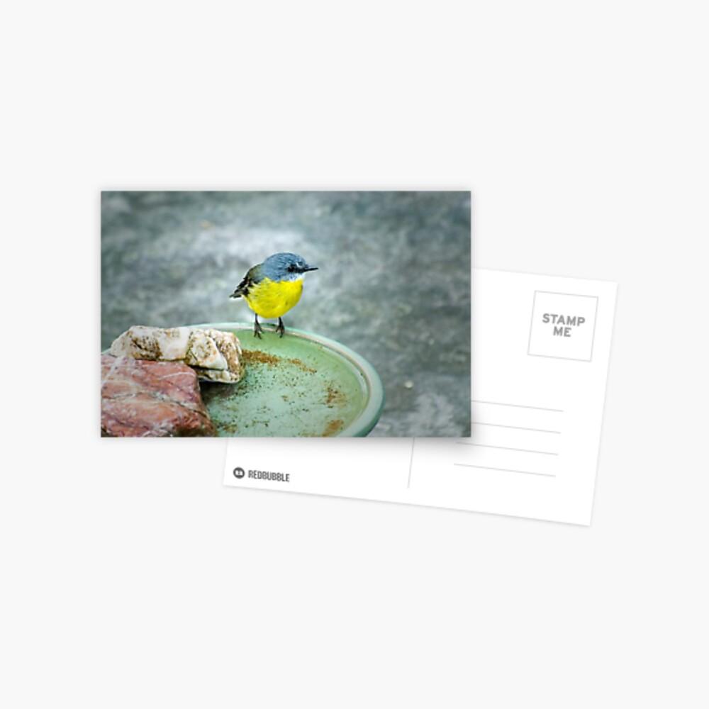 Eastern Yellow Robin Postcard