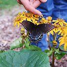 Blue Ridge Pet by Sunshinesmile83