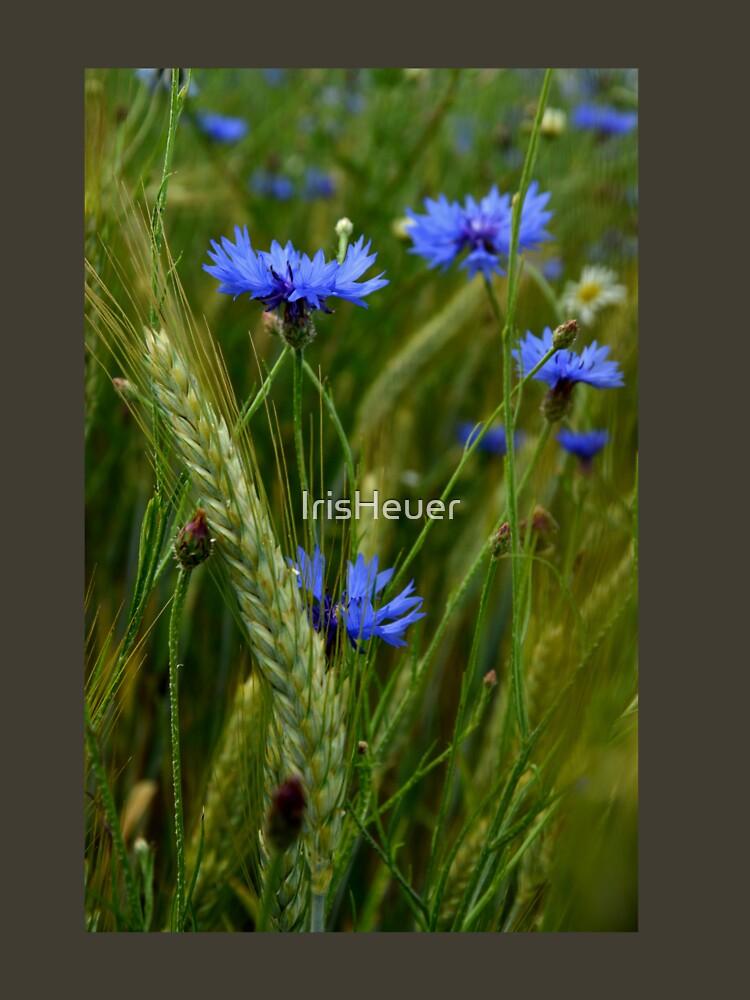 Cornflowers / Cornflowers by IrisHeuer