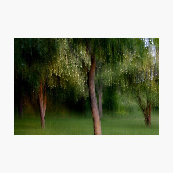 The Park at Dusk Photographic Print