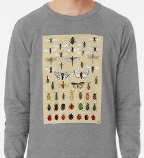 Entomologie Insektenstudien Sammlung Leichter Pullover