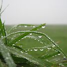 Grass and the Dew by adbetron