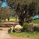 Moonyoonooka Station 2, Western Australia by Elaine Teague