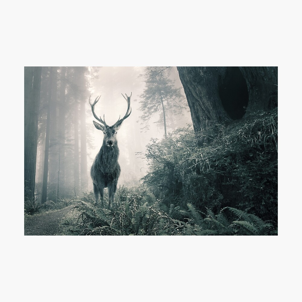 """""""Guardian Of The Forest"""" by Cat Burton Photographic Print"""