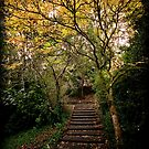 Stairway to Autumn by Lisa Kenny