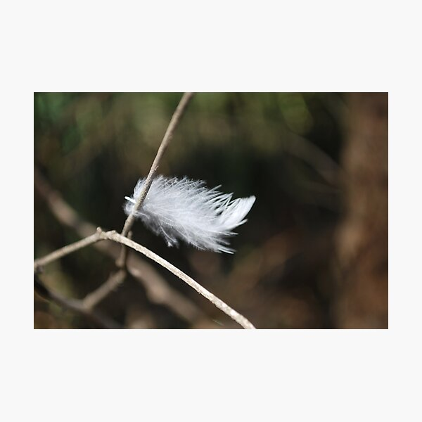 Feather in the Bush Photographic Print